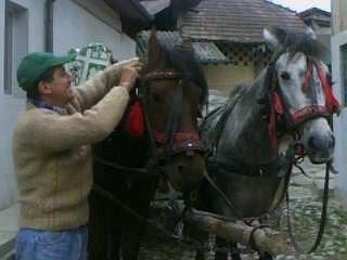 boagher, barbat, 51 ani, Pucioasa
